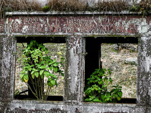 rotted old window with plants in it
